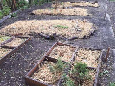 Les premières plantations