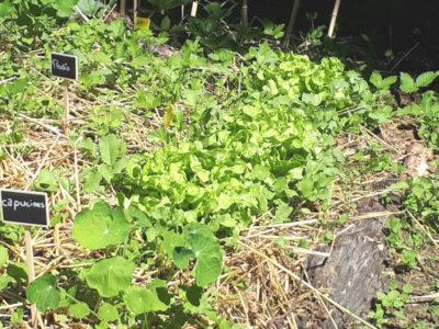 17 mai: des salades bonnes à déguster!